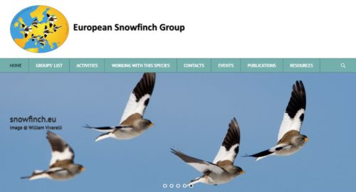 European Snowfinch Group